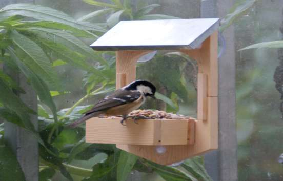 Build Your Own Window Bird Feeder